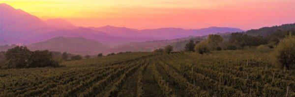 Produzione vino irpino