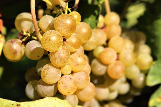 I nostri vini sono ottenuti da vitigni autoctoni del nostro territorio, l'Irpinia.