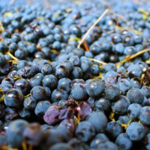 La maturazione dell'uva