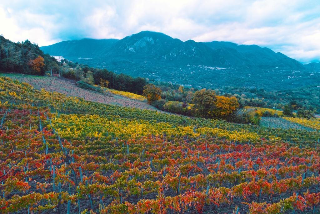 Fattori ambientali e climatici rendono l'Irpinia terra speciale per la coltura di uve da vini pregiati.