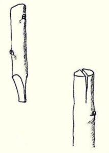 vitigno e tecniche di innesti in irpinia